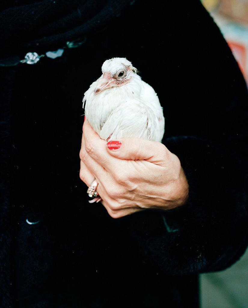 BIRD | IHMEZENTRUM HANNOVER